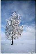 bfoto ru 210a Фотобанк бесплатно фото природы высокого разрешения