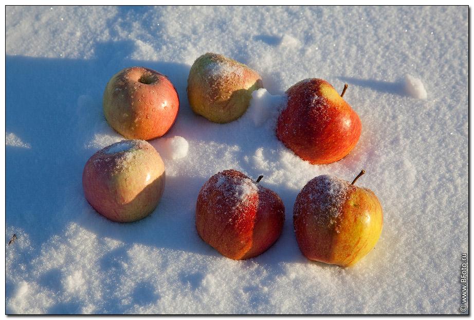 Яблоки на снегу видео