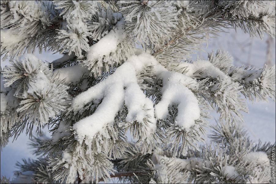 Фотография снег на ветке елки фото