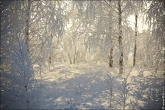 Фото зимы 2014, зимний пейзаж лес в снегу