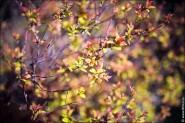 IMG 7659 185x123 Sigma AF 35mm f/1.4 DG HSM Canon EF    35 мм светосильный фикс от сигмы