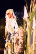 parade dresses 2103 122x180 Парад карет и маскарадных костюмов в Испании