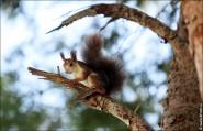 IMG 6331a 185x119 Видео и фото белки в лесу, фотографии белок