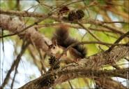 IMG 6345a 185x127 Видео и фото белки в лесу, фотографии белок
