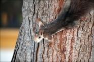 IMG 6357a 185x123 Видео и фото белки в лесу, фотографии белок