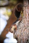IMG 6372a 121x180 Видео и фото белки в лесу, фотографии белок