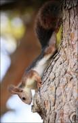 IMG 6373a 115x180 Видео и фото белки в лесу, фотографии белок