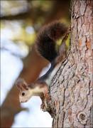 IMG 6376a 131x180 Видео и фото белки в лесу, фотографии белок