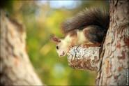 IMG 6378a 185x123 Видео и фото белки в лесу, фотографии белок
