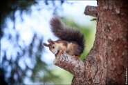 IMG 6389a 185x123 Видео и фото белки в лесу, фотографии белок