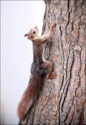 IMG 6393a 124x180 Видео и фото белки в лесу, фотографии белок