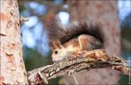 IMG 6418a 185x120 Видео и фото белки в лесу, фотографии белок