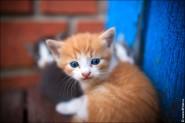 IMG 9975 185x123 Фото маленьких котят, фотографии котят