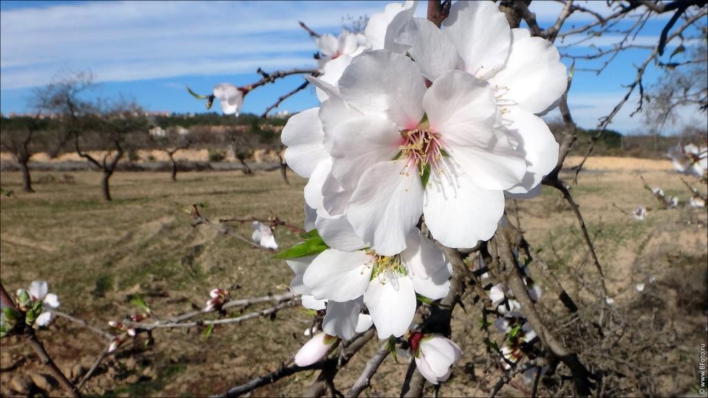 foto vesna oboi rabochego stola 1920 1080 1024x576 Красивые обои рабочего стола высокого качества 1920х1080 цветы весна и море пляж