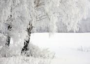 zima foto besplatno 185x133 Зима фото скачать бесплатно