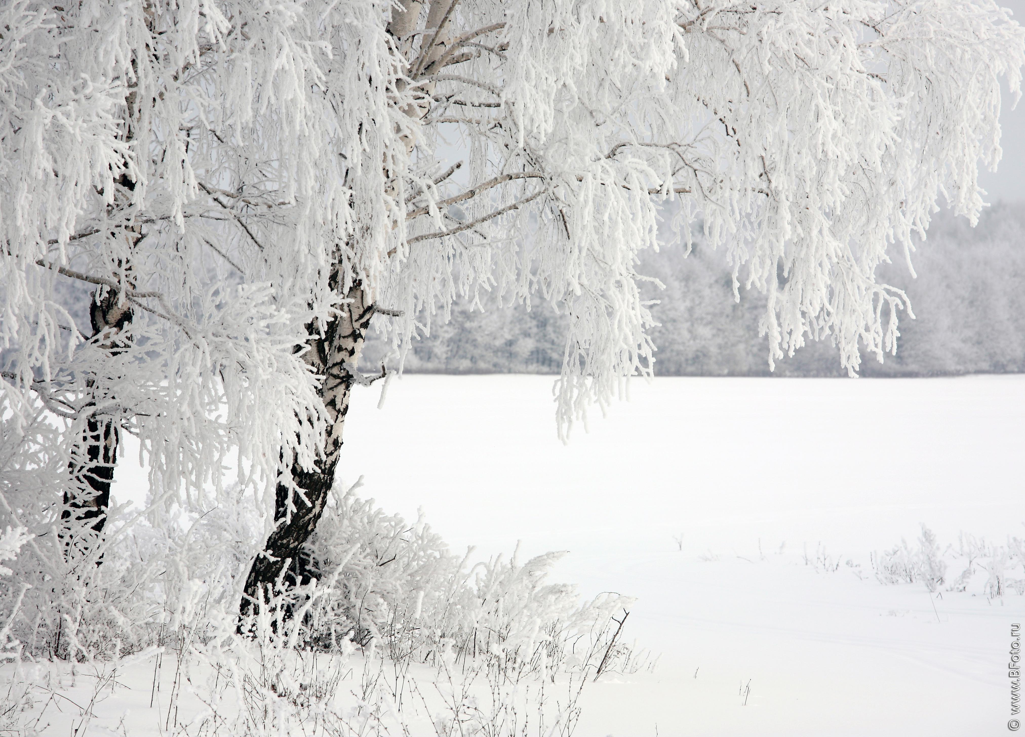 фото зимы скачать