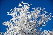 IMG 0130 185x123 Зимние фото природы высокого разрешения, снег картинки зимы