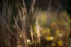 fotobank foto high resolution 2016 250x166 Новые фотографии высокого разрешения, природа, пейзажи