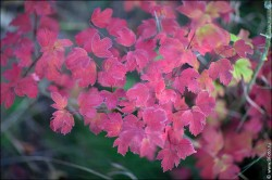 fotobank foto high resolution 2017 250x166 Новые фотографии высокого разрешения, природа, пейзажи