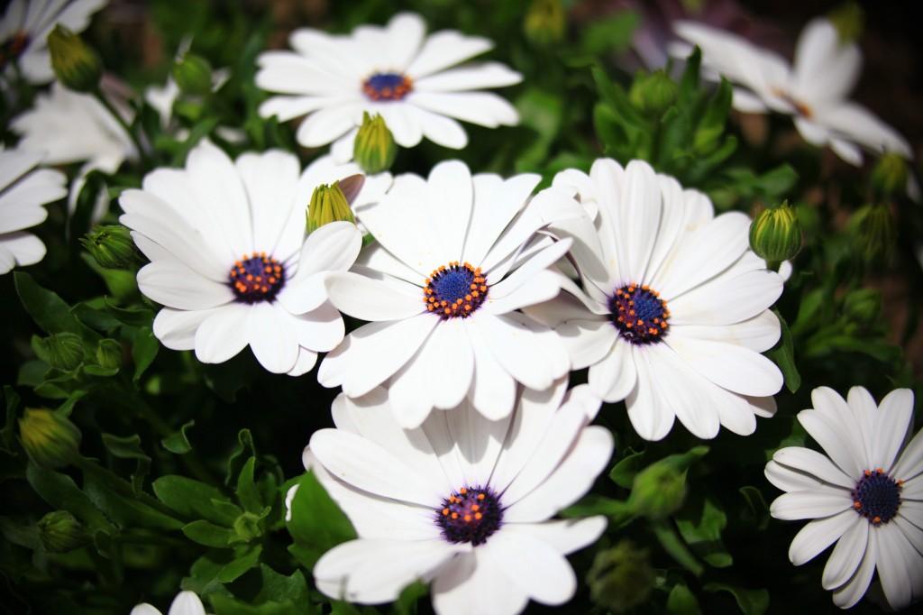 foto flowers bfoto ru 2015 1024x682 Новые фото цветов высокого разрешения бесплатно