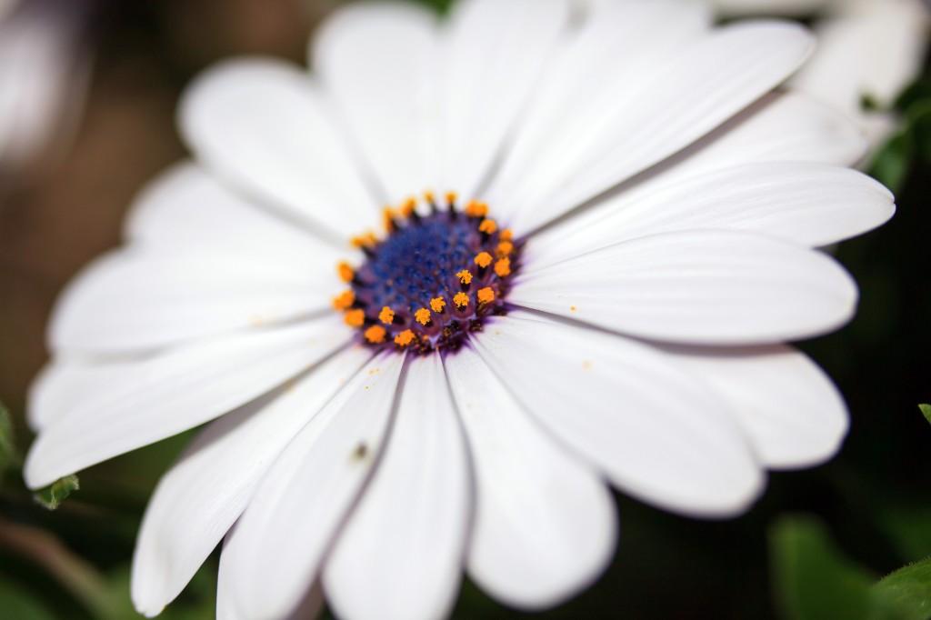 foto flowers bfoto ru 2016 1024x682 Новые фото цветов высокого разрешения бесплатно
