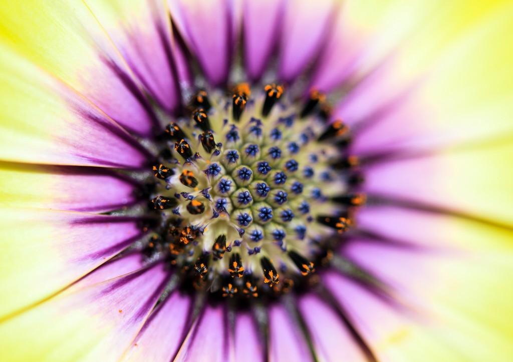 foto flowers bfoto ru 2019 1024x723 Новые фото цветов высокого разрешения бесплатно
