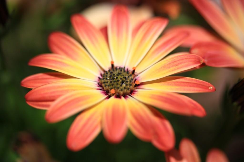 foto flowers bfoto ru 2020 1024x682 Новые фото цветов высокого разрешения бесплатно