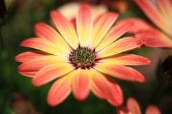 foto flowers bfoto ru 2020 250x166 Новые фото цветов высокого разрешения бесплатно