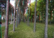 3d foto 2011 185x130 Стереоизображения или 3D фото, анаглифные изображения