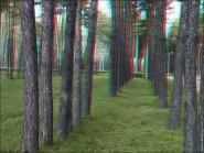 3d foto 2013 185x139 Стереоизображения или 3D фото, анаглифные изображения