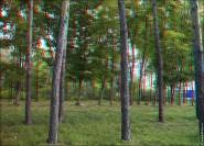 3d foto 2014 185x133 Стереоизображения или 3D фото, анаглифные изображения