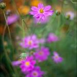 IMG 2138 150x150 Объектив Canon EF 50 mm f/1.8 II примеры фото, отзыв, обзор