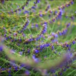 IMG 2989 150x150 Объектив Canon EF 35 f/1.4L USM отзыв и фотографии