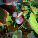 IMG 3143 150x150 Стереоизображения или 3D фото, анаглифные изображения
