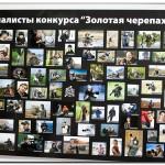 IMG 8092 150x150 Выставка фотографий Золотая черепаха 2011 фотоотчет