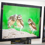 IMG 8095 150x150 Выставка фотографий Золотая черепаха 2011 фотоотчет