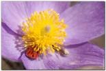 bfoto ru 1555 155x103 Объектив для макро Canon EF S 60 f/2.8 Macro USM