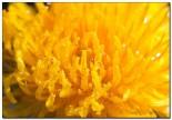 bfoto ru 1595 155x108 Объектив для макро Canon EF S 60 f/2.8 Macro USM