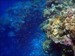 bfoto ru 3785 155x116 Наливные 3D полы