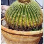 cactus algar spain 19 150x150 Водопады Испании Альгара и Ботанический сад «Кактусы Альгара»