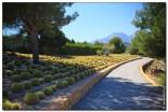 Водопады Альгара и Ботанический сад «Кактусы Альгара»