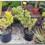 cactus algar spain 20 150x150 Водопады Испании Альгара и Ботанический сад «Кактусы Альгара»