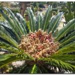 cactus algar spain 25 150x150 Водопады Испании Альгара и Ботанический сад «Кактусы Альгара»