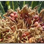 cactus algar spain 26 150x150 Водопады Испании Альгара и Ботанический сад «Кактусы Альгара»