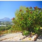 cactus algar spain 28 150x150 Водопады Испании Альгара и Ботанический сад «Кактусы Альгара»