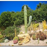 cactus algar spain 29 150x150 Водопады Испании Альгара и Ботанический сад «Кактусы Альгара»