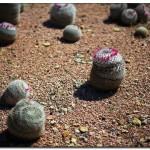 cactus algar spain 3 150x150 Водопады Испании Альгара и Ботанический сад «Кактусы Альгара»