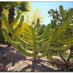 cactus algar spain 30 150x150 Водопады Испании Альгара и Ботанический сад «Кактусы Альгара»