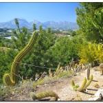 cactus algar spain 33 150x150 Водопады Испании Альгара и Ботанический сад «Кактусы Альгара»