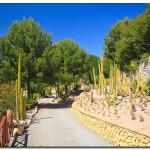 cactus algar spain 35 150x150 Водопады Испании Альгара и Ботанический сад «Кактусы Альгара»